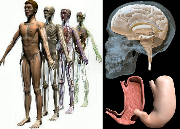 3d Animated Anatomy Review Download 3d Anatomy Book