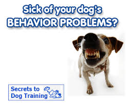 Click Here To Download The Secrets To Dog Training eBook Now